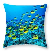 Schooling Raccoon Throw Pillow
