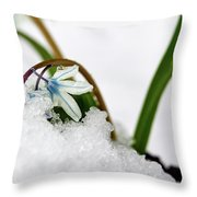 Scilla On Snow Throw Pillow