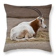 Scimitar Horned Dammah Throw Pillow