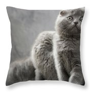 Scottish Fold Cats Throw Pillow by Evgeniy Lankin