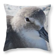 Sea Birds Sanibel Island Throw Pillow