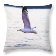 Seagulls Flying Throw Pillow
