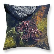 Seaweed Growing In A Rockpool On The Shore Roundstone County Galway Ireland Throw Pillow
