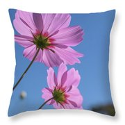 Sensation Cosmos Bipinnatus Pink Cosmos Standing Up Towerd Sky Throw Pillow