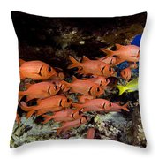 Shoulderbar Soldierfish Throw Pillow