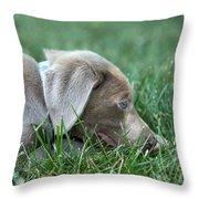 Silver Labrador Retriever Puppy  Throw Pillow