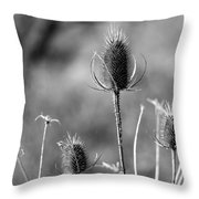Simply Thistle Throw Pillow by Rick Morgan
