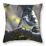 Tufted Titmouse - Small Bird Throw Pillow