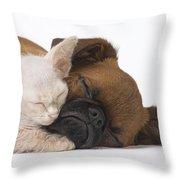 Small Brabant Griffon, Petit Brabancon, Puppy Dog With Laperm Kitten Throw Pillow