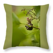 Snail Stretching Throw Pillow