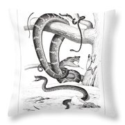 Snakes And Frogs Of Costa Rica Throw Pillow by T Sinclair