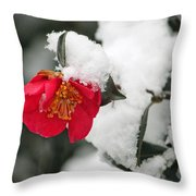 Snow Bloom Throw Pillow by Suzanne Gaff