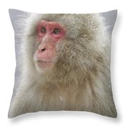 Snow-dusted Monkey Throw Pillow