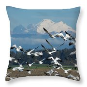 Snow Geese In Skagit Valley Throw Pillow