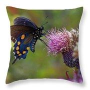 Spicebush Swallowtail On Bull Thistle Throw Pillow