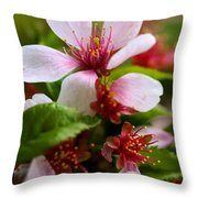 Spring Cherry Blossoms Throw Pillow