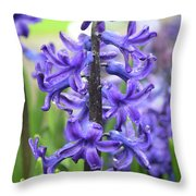 Spring Time With Blooming Hyacinth Flowers In A Garden Throw Pillow