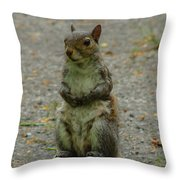 Eastern Gray Squirrel Throw Pillow