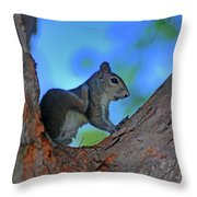 1- Squirrel Throw Pillow