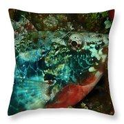 Stop Light Parrot Fish Throw Pillow