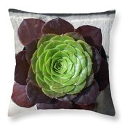 Succulent Rose Throw Pillow