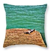 Sun Bathing Throw Pillow