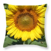 Sunflower 09 Throw Pillow