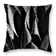 Sunlit Cactus Throw Pillow