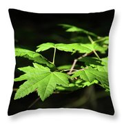 Sunny Summer Maple Throw Pillow