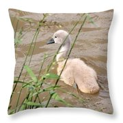 Swan Throw Pillow