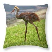 Sweet Juvenile Sandhill Crane Throw Pillow