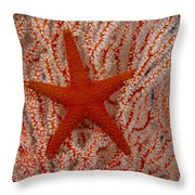 Thailand, Marine Life Throw Pillow
