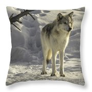 The Gray Wolf Throw Pillow