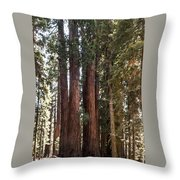 The House Group Giant Sequoia Trees Sequoia National Park Throw Pillow