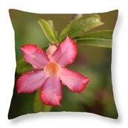The Pink Wonder Throw Pillow