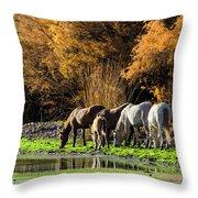 The Salt River Wild Horses  Throw Pillow