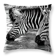 Thirsty Zebras Throw Pillow