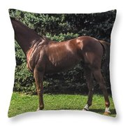Thoroughbred Stallion Throw Pillow
