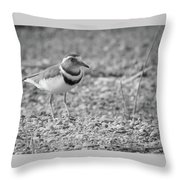 Three Banded Plover Throw Pillow