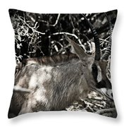 Time-out Throw Pillow