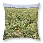 Tomato Field, California Throw Pillow