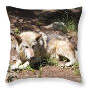 Tour Of Rocky Mountain Wildlife Foundation Throw Pillow