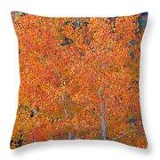 Translucent Aspen Orange Throw Pillow