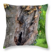 Tree Bark Detail, Natural Background. Throw Pillow