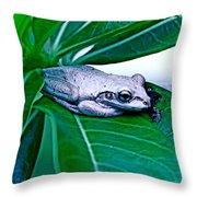 Tree Frog On Desert Rose  Throw Pillow