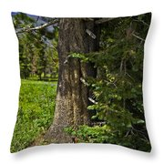 Tree In Vail Throw Pillow