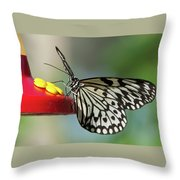Tree Nymph Butterfly Throw Pillow
