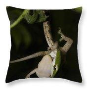 Tree Snake Eating Gecko Throw Pillow