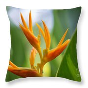 Tropical Bird Of Paradise, Sri Lanka Throw Pillow