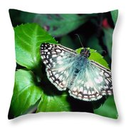 Tropical Checkered Skipper Throw Pillow by Thomas R Fletcher